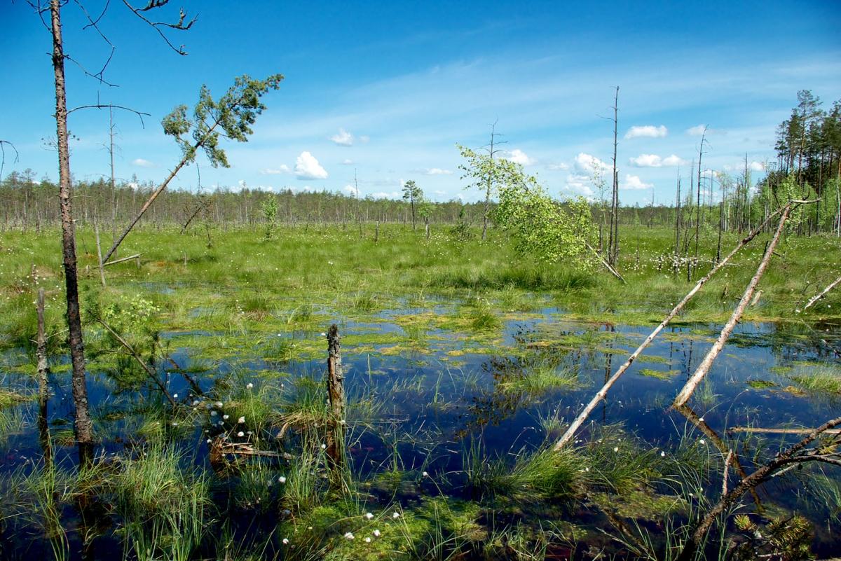 Нарткале, купить болота и их тайны дом недорого Великовечное