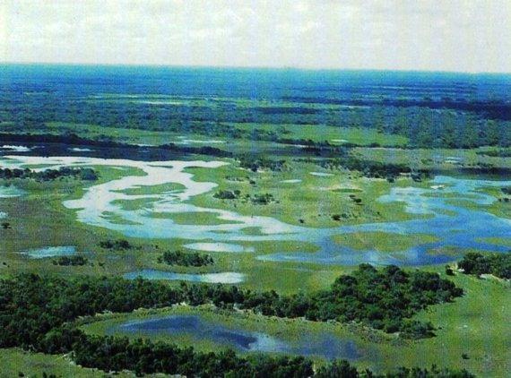 Васюганские болота: описание и особенности